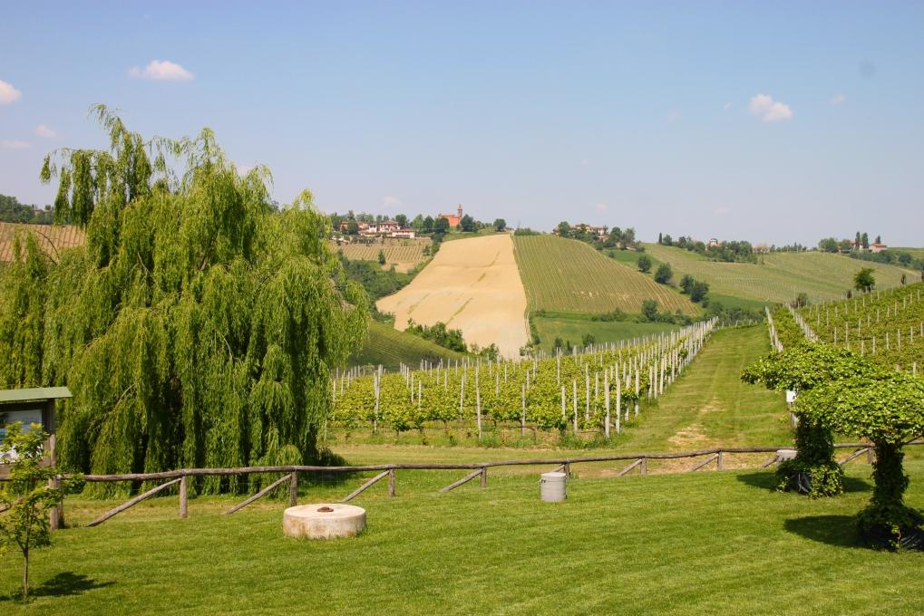 img_4694-vingarden-utsikt